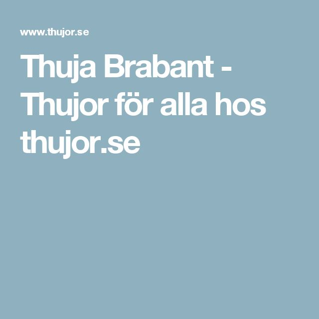 Thuja Brabant - Thujor för alla hos thujor.se