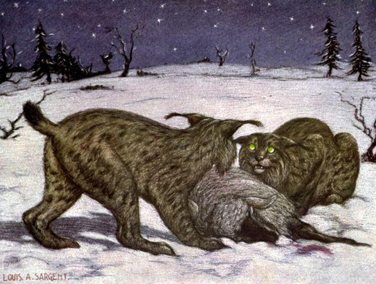 Rysie /lynxes/ (Finn 1909)