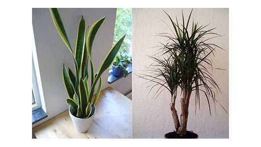 1000+ Images About INDOOR WALL PLANTS On Pinterest