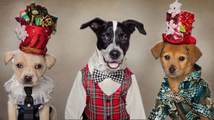 Rescue Dogs Get A Festive Makeover: CUTE AS FLUFF on the Scene: https://thescene.com/watch/barcroft/rescue-dogs-get-a-festive-makeover-cute-as-fluff