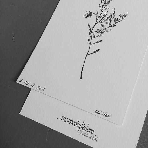 Olivier Branche d'arbre du sud-est de la France par monocotyledone                                                                                                                                                                                 Plus