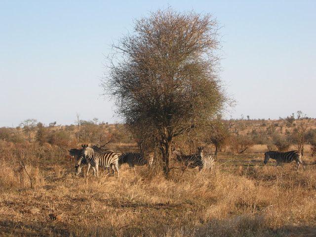 MILOVÁNÍ V PŘÍRODĚ: South Africa. Kruger National Park. Divoká příroda...