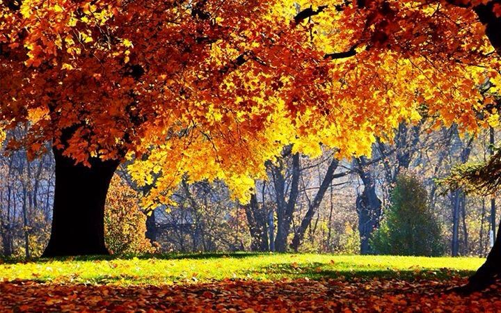 Autumn a& Fall