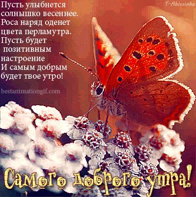Самого доброго утра! ( бабочка на цветке) - анимационные картинки и gif открытки