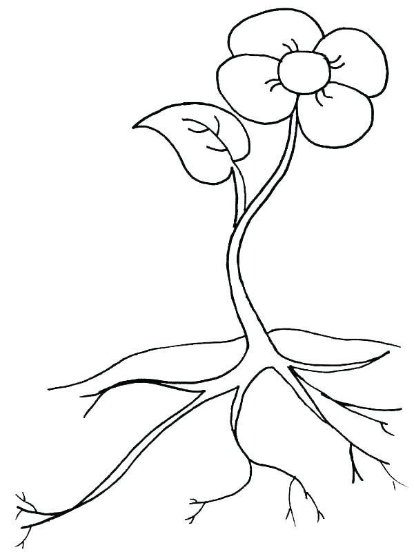 Parts Of The Flower Coloring Page Youngandtae Com Flower Coloring Pages Fruit Coloring Pages Sunflower Coloring Pages