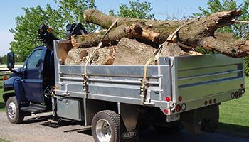 Tree Removal - Dave Lund Tree Service and Forestry Co Ltd.