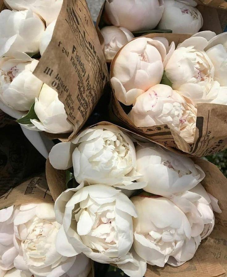 Cream Aesthetic, Flower Aesthetic, Aesthetic Drawing, Aesthetic Style, Design Blog, No Rain, My Flower, Cactus Flower, Mini Cactus