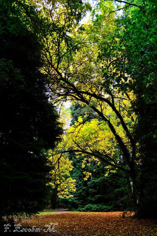 Jardín Botánico, Valdivia.