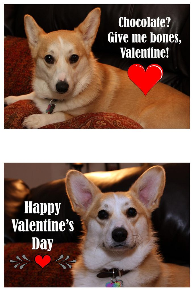 Happy Valentine S Day From Llbean Happy Valentines Day Happy Valentine Dog Valentines
