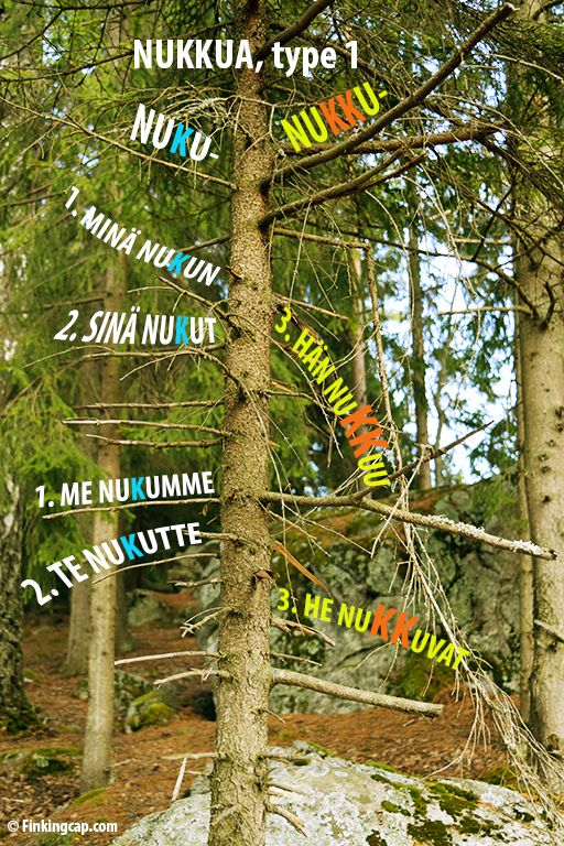 Taivutuspuu: weak conjugation on the left, strong conjugation on the right. Finnish verb type 1: nukkua.