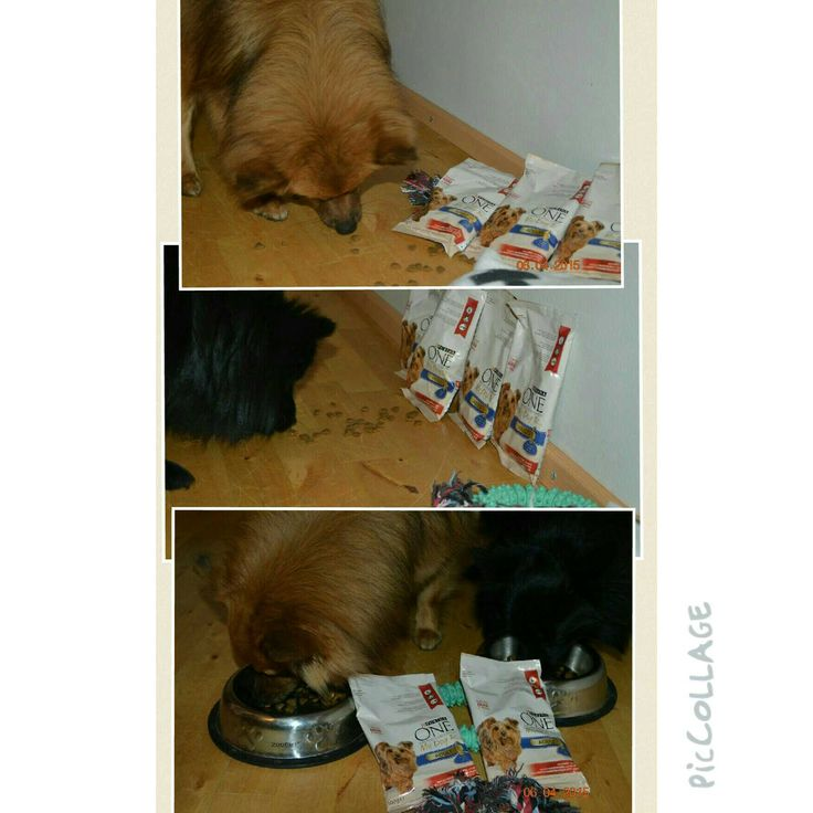 #hopottajat #mydogis #purinahopo #purinaone www.hopottajat.fi www.purinaone-mydogis