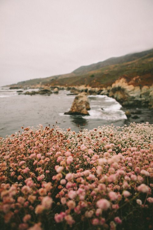 a coastline with blooms