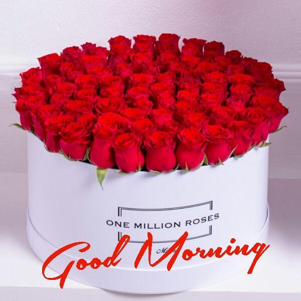 Good Morning With One Million Roses Jkahir Com Hd Wallpaper Whatsapp Image Youtube Video Mobile Wa Good Morning Flowers Good Morning Good Morning Images Good morning mobile wallpaper hd