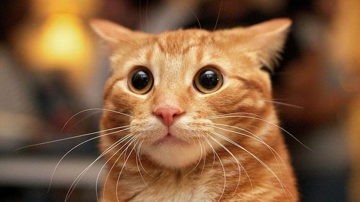 Картинки по запросу смешные картинки с животными | Милые ...