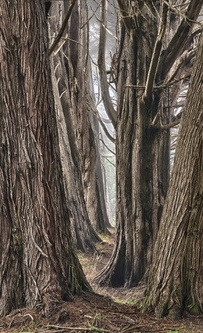 Best Poland Images On Pinterest Poland Nature And We - To this day the mystery of polands crooked forest remains unexplained