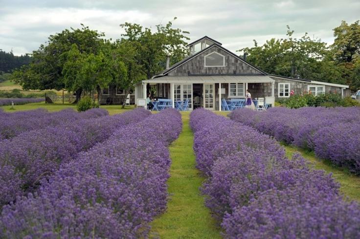 Lavender Tea House, Frutillar-Chile