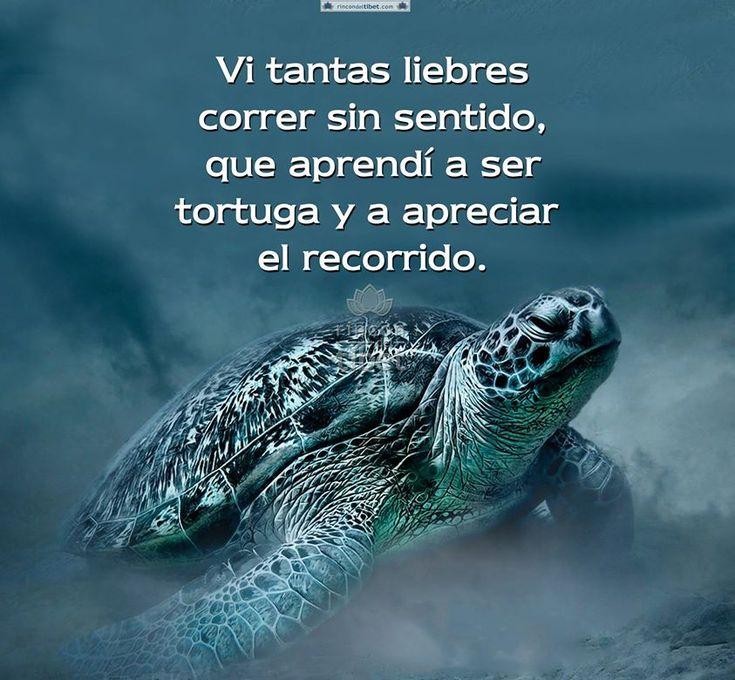 Ser tortuga y apreciar el camino