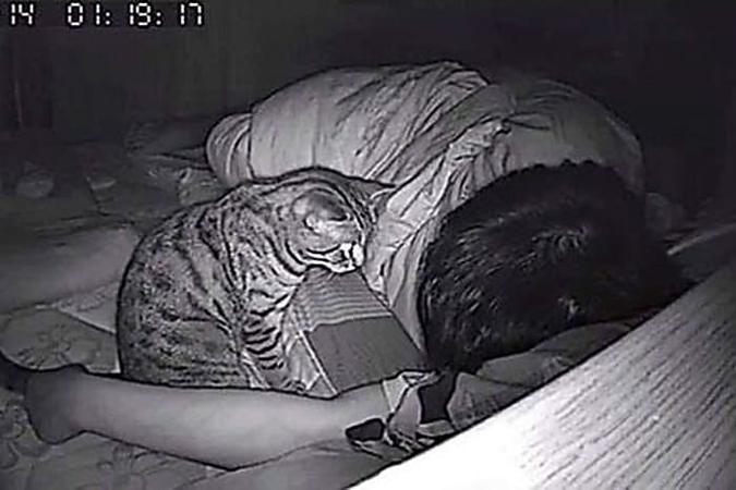 14 Schrage Schnappschusse Von Katzen Katzen Schnappschusse