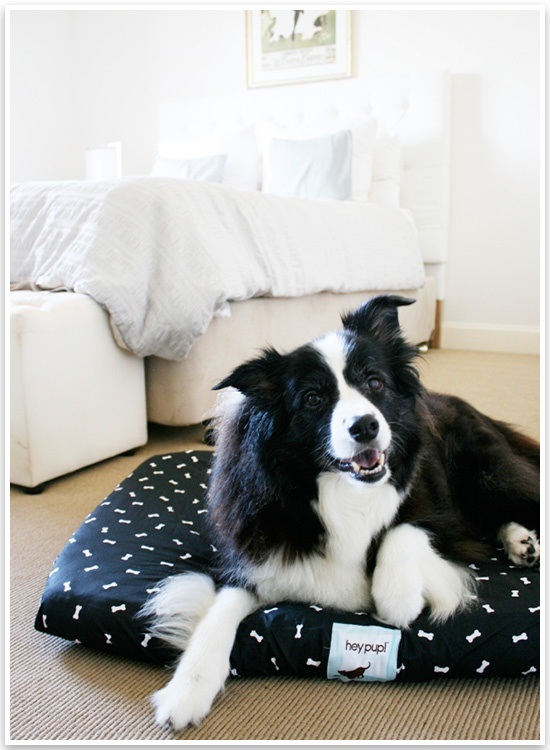 Hey Pup! Dog Linen: Hey Pup, Alfie S Things, Dog Culture, Dog Products
