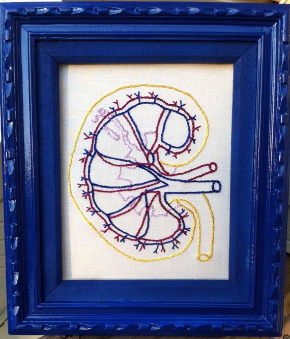 Framed Kidney Anatomy selected by Hupertan