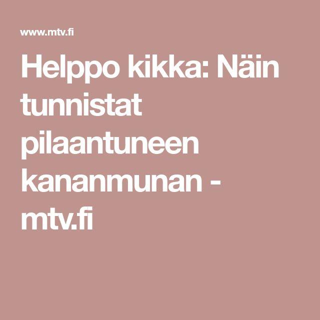 Helppo kikka: Näin tunnistat pilaantuneen kananmunan - mtv.fi
