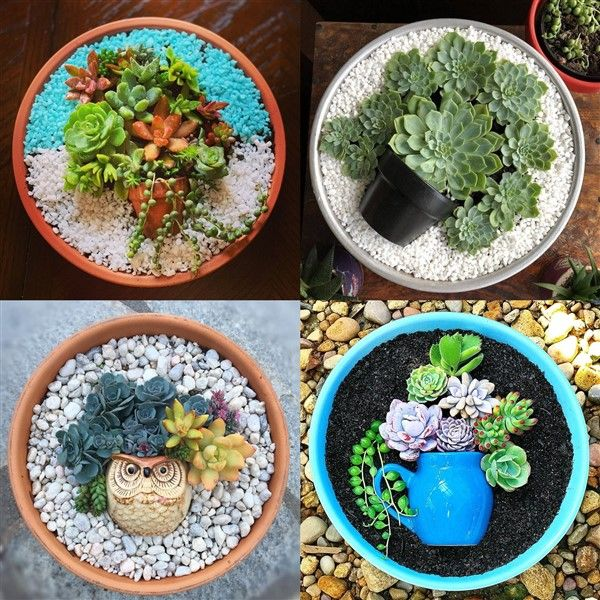 Charming Succulent Pot In A Pot Ideas Succulent Pots Succulents Colorful Succulents