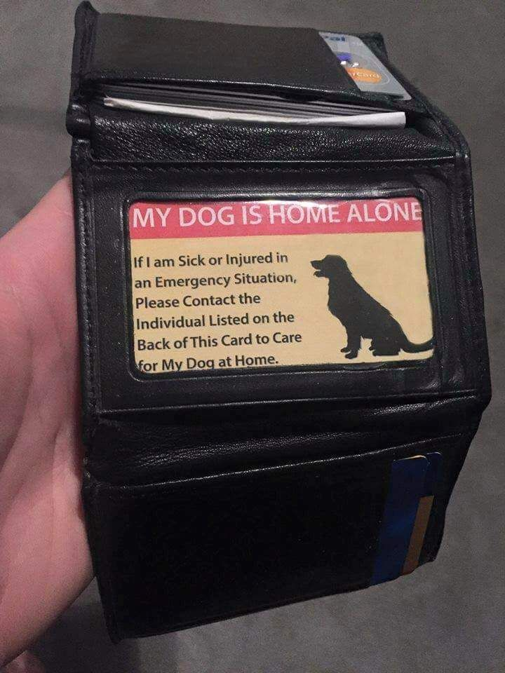 if you are a pet owner this is a must have. If you drive with your pet, in case you have an accident, have a card in your wallet with your vet's address and phone number and permission for a police officer to take a credit card to pledge payment for any injuries your dog received in the wreck.