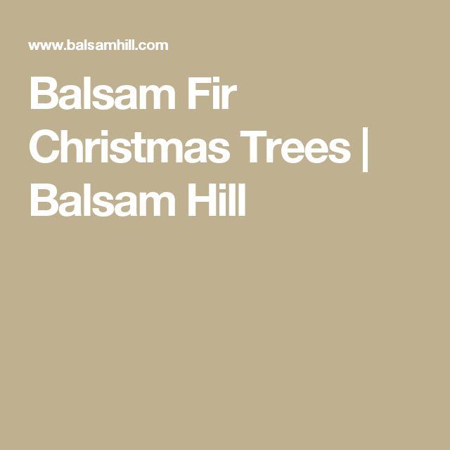 Balsam Fir Christmas Trees | Balsam Hill