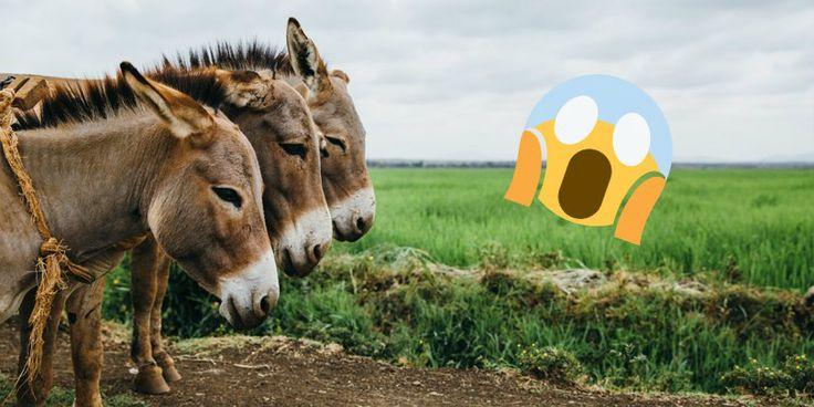 Son Bir Ayda Tonlarca At, Eşek ve Domuz Eti Ele Geçirildi, Peki Ya 'Piyasaya' Sürülenler?