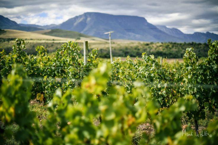 Mandi Scholtz Photography: Edenberg wine farm Riversdale.