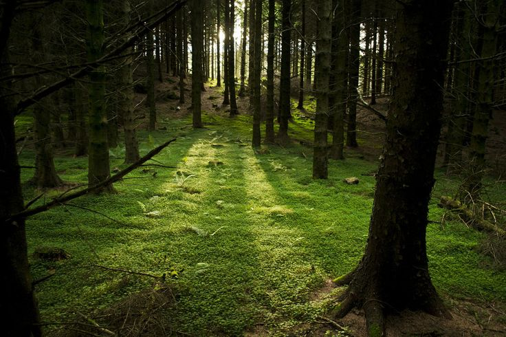 And forests that look like something out of a fantasy novel.