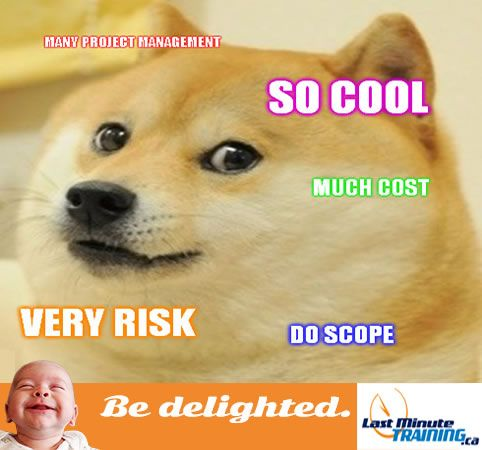 Meme Doge Funny Project Management Office Employees