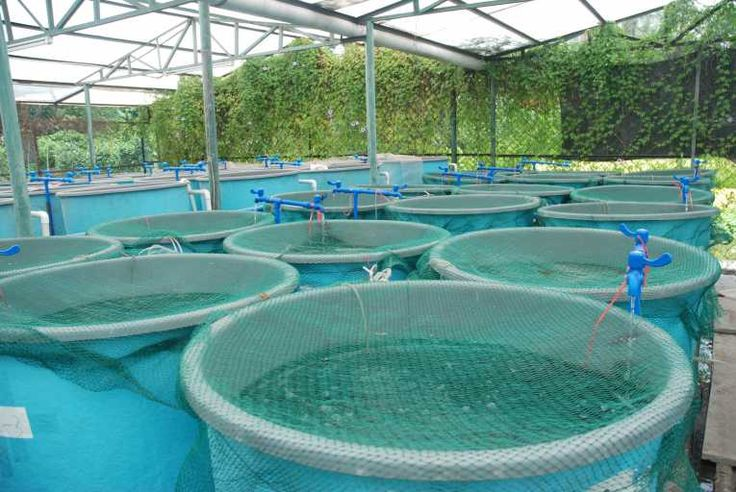 A new hope for aquaculture, eco-clean fish farms
