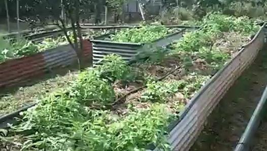 Permaculture un jardin urbain et un syst me aquaponique for Jardin urbain permaculture
