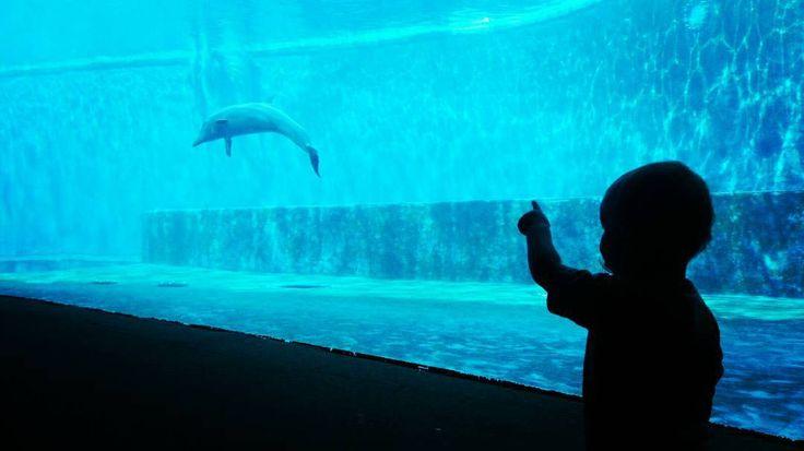 Nino mirando delfines!! #nino #ahijadito #delfines #genova #acquariodigenova #AcquarioVillage #Italy #Genova #genoa #tourism #leisure #family #museum #Italia