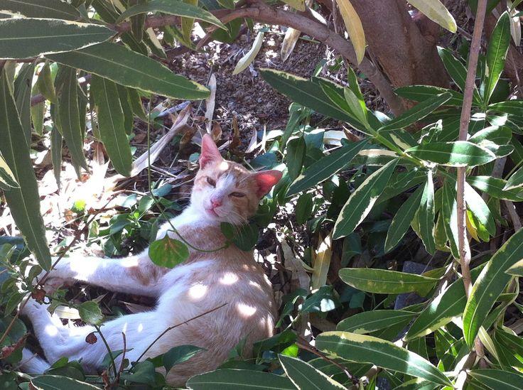 Everyone enjoys the shade of the trees!   #cat #garden #cats #fur #shade #chill #summer #eleonashotel