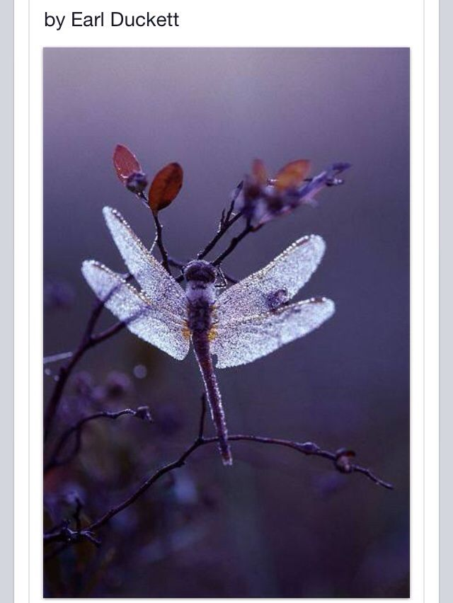 手机壳定制asics prices uk I love dragonflies