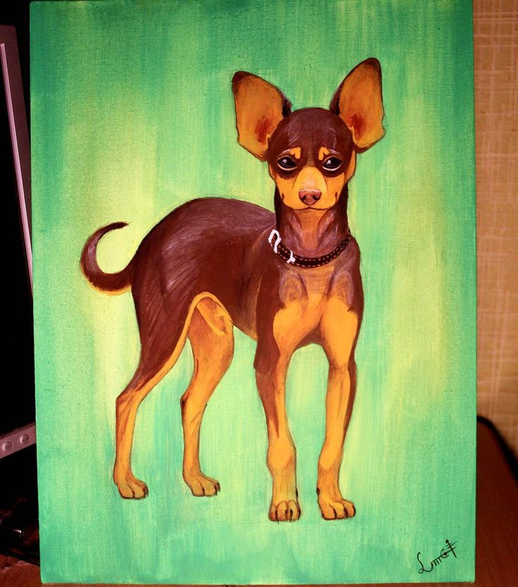 My old #painting of my sister's #dog #toyterrier. #art #acrylicpainting