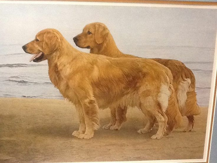 39 best images about golden retriever paintings and prints on pinterest limited edition prints. Black Bedroom Furniture Sets. Home Design Ideas