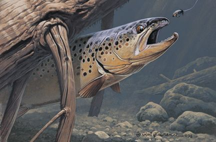 trout fly fishing wallpaper - photo #37