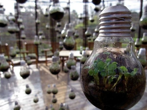 beautiful. Not sure where we could do this.  hanging+garden+lights   Light Bulb Hanging Garden [PIC]