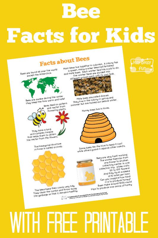 Fun Bee Facts for Kids With Free Printables