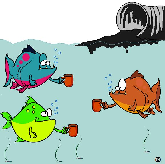 All that caffeine you're drinking.... is going down the drain and stimulating the fishes.  Read more.