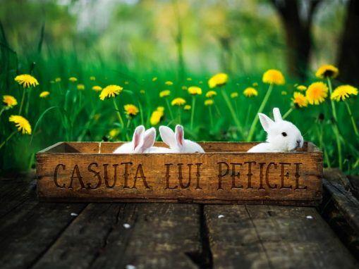 Casuta Lui Peticel Craiova-Loc de joaca copii