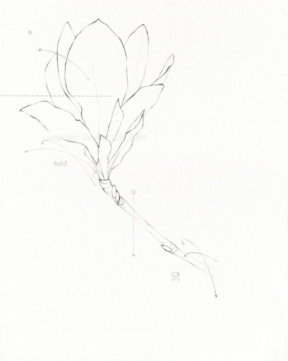 Line Drawing Pencil : Pencil line drawing of magnolia flower hold original