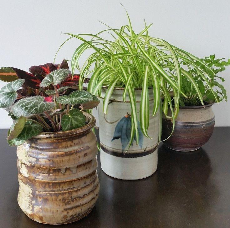 best 25 cheap plant pots ideas on pinterest plastic. Black Bedroom Furniture Sets. Home Design Ideas