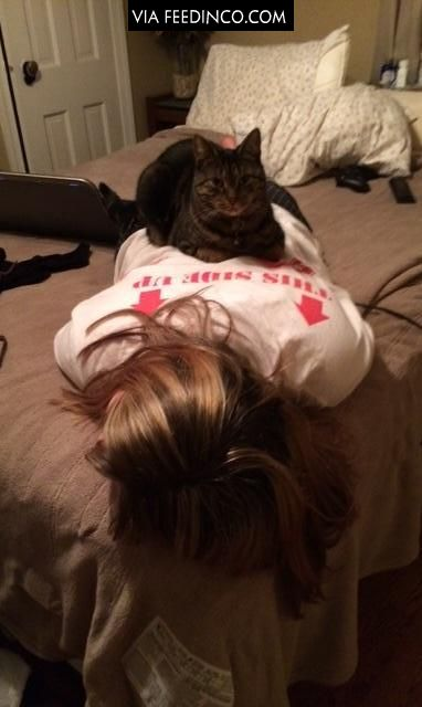 His girlfriend had a long day, came in to bring her dinner and saw this. Cats don't care.