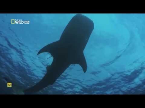 ¿Cómo se originó la Tierra? | Documental HD - YouTube