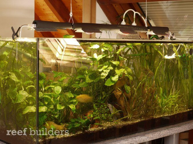 Die besten 25+ Aquarium LED Ideen auf Pinterest Aquarium LED