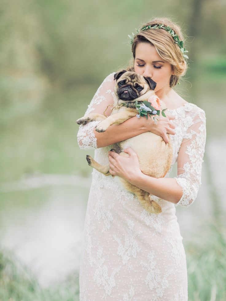 bride + pug dog